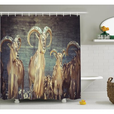 Print Shower Curtain Size: 69 H x 75 W