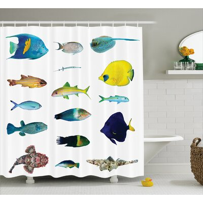 Marine Life Decor Shower Curtain Size: 69 H x 75 W