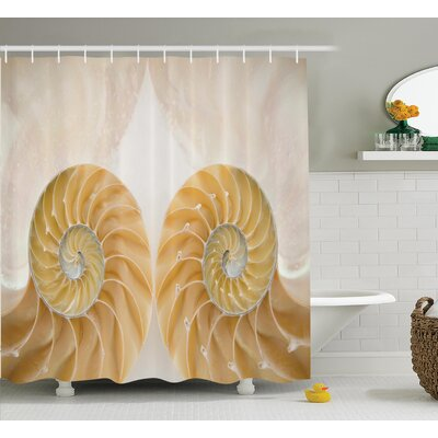 Inside Out Seashell Shower Curtain Size: 69 H x 84 W