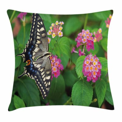 Swallowtail Butterfly on Flower Square Cushion Pillow Cover Size: 16 x 16