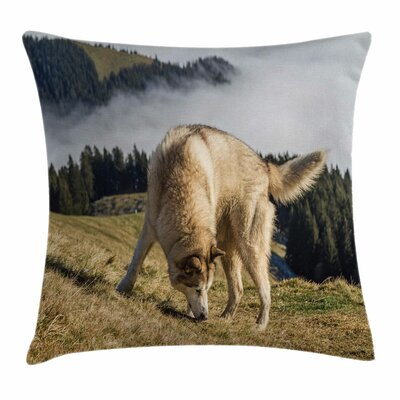 Alaskan Malamute Purebred Dog Square Pillow Cover Size: 24 x 24