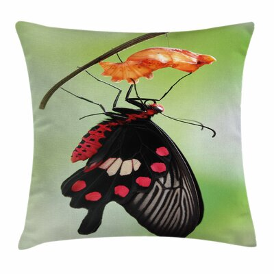 Swallowtail Coming Out Cocoon Square Cushion Pillow Cover Size: 16 x 16
