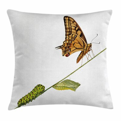 Swallowtail Lifes Stages Theme Square Cushion Pillow Cover Size: 18 x 18
