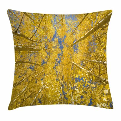Aspen Trees Square Pillow Cover Size: 16