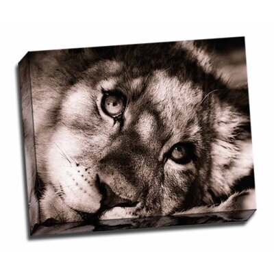 'Lion Cub II' Graphic Art on Wrapped Canvas FDGEGWPSWLD183