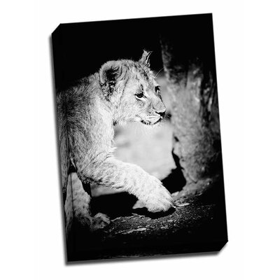 'Lion Cub II' Photographic Print on Wrapped Canvas FDGEGWPSWLD340