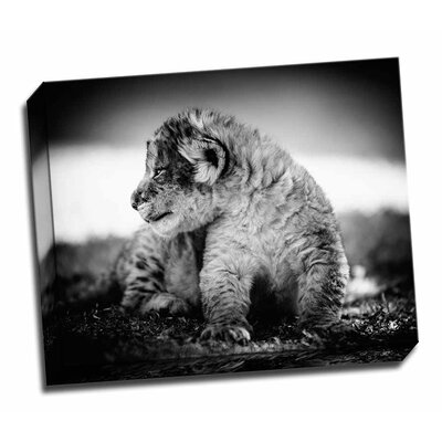 'Lion Cub' Photographic Print on Wrapped Canvas FDGEGWPSWLD337