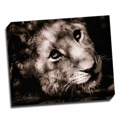 'Lion Cub I' Graphic Art on Wrapped Canvas FDGEGWPSWLD182