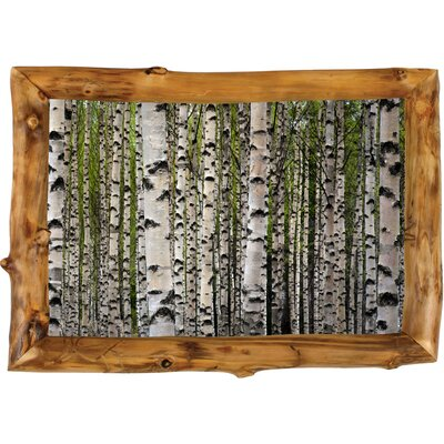 Spring Birch by Ying Feng Johansson Framed Photographic Print