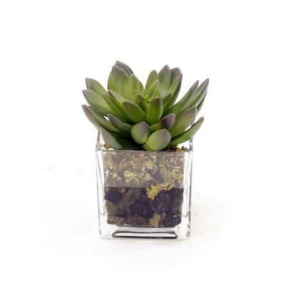 Glass Succulents Plant in Pot