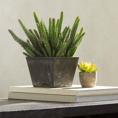 Stacia Euphorbia Cactus Recycled Planter