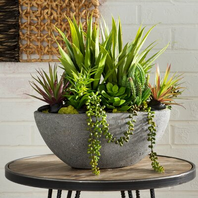 Emory Assorted Succulent Planter