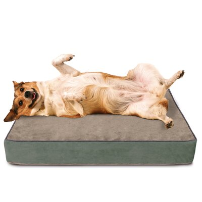 Dog Bed with Lux Cover Size: Extra Large (40 L x 33 W)