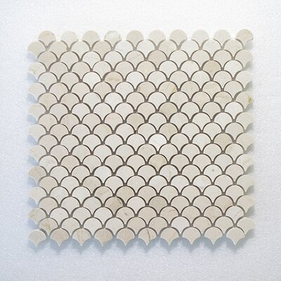 Petit Oyster Wall Polished 12 x 12 Natural Stone Mosaic Tile in White/Gray