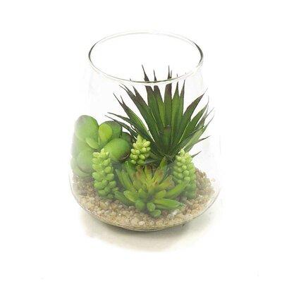 Succulent in Glass (Set of 2) ZFOYA15