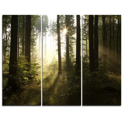 Early Morning Sun in Misty Forest - 3 Piece Graphic Art on Wrapped Canvas Set PT9540-3P
