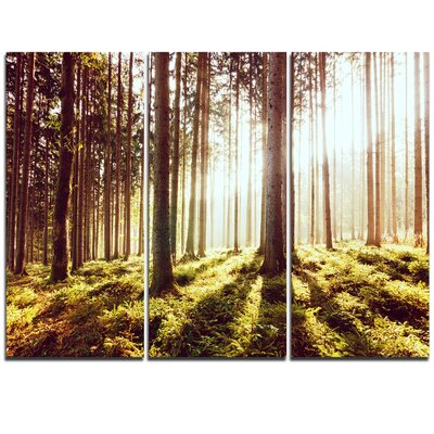 Early Morning Shadows of Forest - 3 Piece Graphic Art on Wrapped Canvas Set PT11767-3P