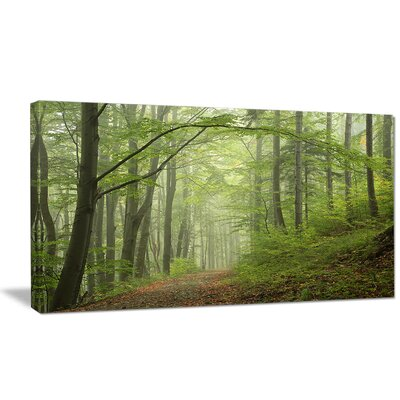 'Early Green Fall Forest' Photographic Print on Wrapped Canvas PT9741-20-12
