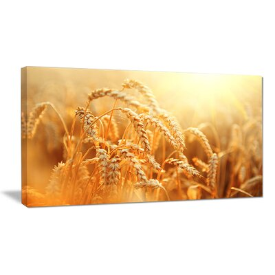 'Ears of Golden Wheat Close-up' Photographic Print on Wrapped Canvas PT14241-60-28