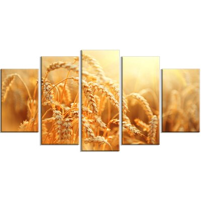 'Ears of Golden Wheat Close-up' 5 Piece Photographic Print on Wrapped Canvas Set PT14241-373