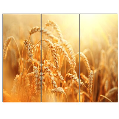 'Ears of Golden Wheat Close-up' 3 Piece Photographic Print on Wrapped Canvas Set PT14241-3P