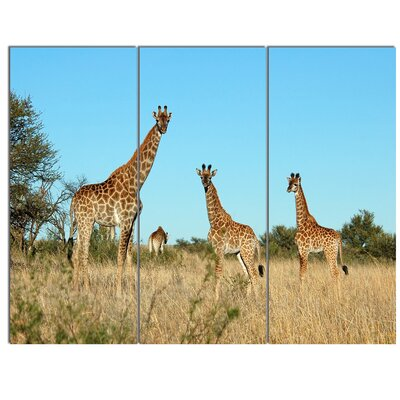 'Giraffe Family in Africa' 3 Piece Photographic Print on Wrapped Canvas Set PT12949-3P