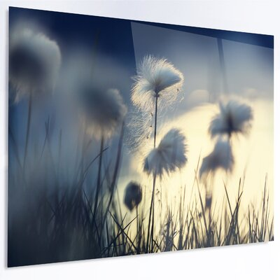 'Arctic Blooming Cotton Flowers' Photographic Print on Metal MT12334-48-40-LED