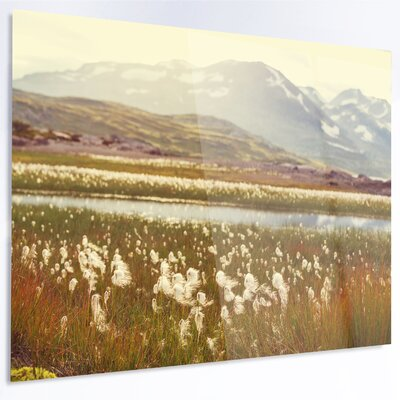 'Arctic Cotton Flowers Meadow' LED Photographic Print on Metal MT12327-48-40-LED