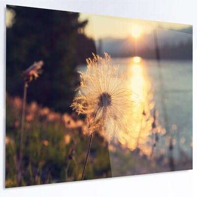 'Arctic Cotton Flowers at Sunset' Photographic Print on Metal MT12412-48-40-LED