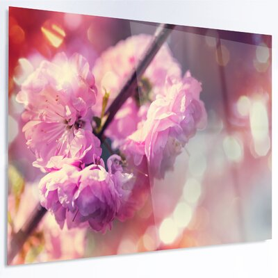 'Beautiful Almond Tree Flowers' LED Photographic Print on Metal MT12416-48-40-LED