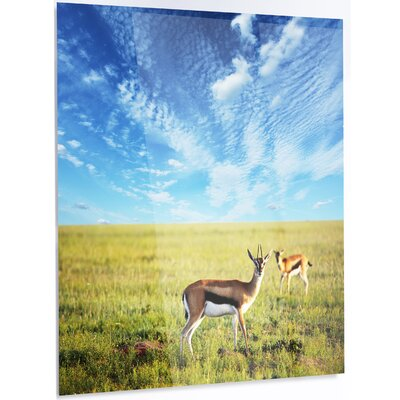 'Antelopes Wandering under Bright Sky' Photographic Print on Metal MT12575-12-28
