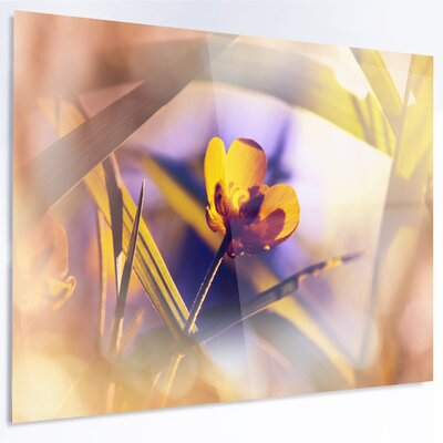 'Yellow Flower on Blue Background' Photographic Print on Metal MT12603-48-30
