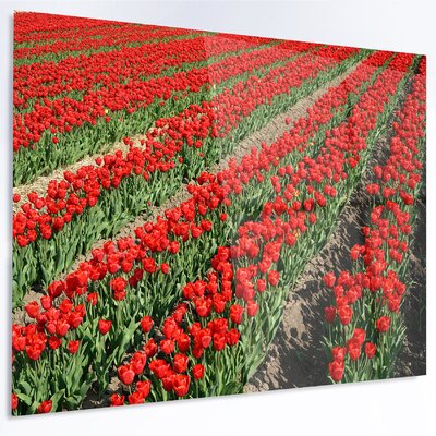 'Rows of Red Tulip Flowers' Photographic Print on Metal MT13087-28-12