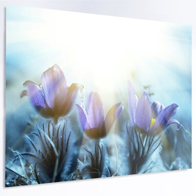 'Blooming Blue Spring Flowers' Photographic Print on Metal MT12839-48-30