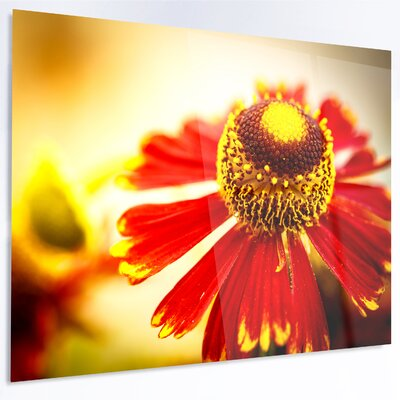 'Beautiful Flower on Yellow Background' Graphic Art on Metal MT13843-48-30