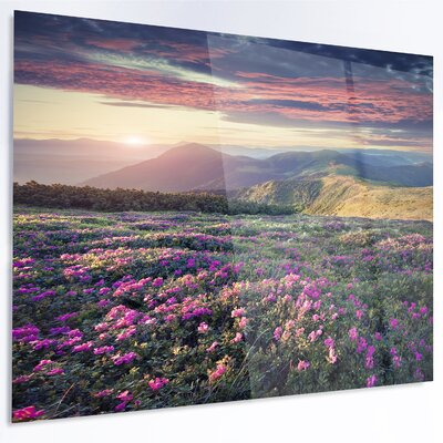"'Blossom Carpet of Pink Rhododendron' Photographic Print on Metal Size: 12"" H x 28"" W x 1"" D MT14606-28-12"