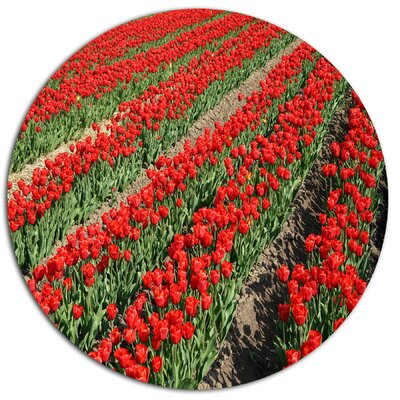 'Rows of Red Tulip Flowers' Photographic Print on Metal MT13087-C11