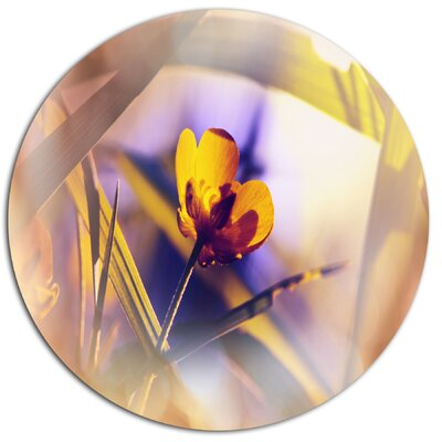 'Yellow Flower on Blue Background' Photographic Print on Metal MT12603-C11