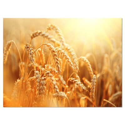 'Ears of Golden Wheat Close-up' Photographic Print on Wrapped Canvas PT14241-40-30