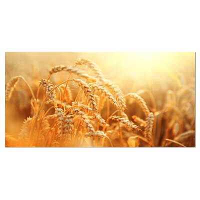 'Ears of Golden Wheat Close-up' Photographic Print on Wrapped Canvas PT14241-32-16