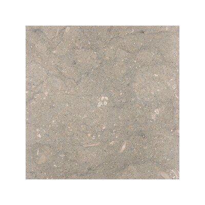 Sea Grass 3 x 6 Limestone Field Tile in Gray