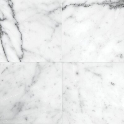 Carrara 6 x 6 Marble Field Tile in Polished White