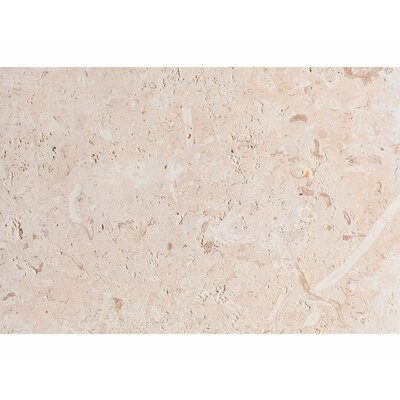 ShellStone Tile 16 x 24 Seashell Field Tile in Beige