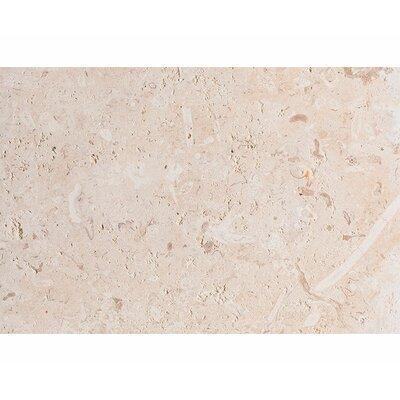 ShellStone Tile 16 x 24 Stone Tile