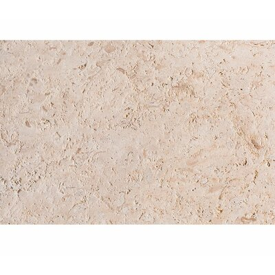 ShellStone Tile 16 x 24 Field Tile in Brushed