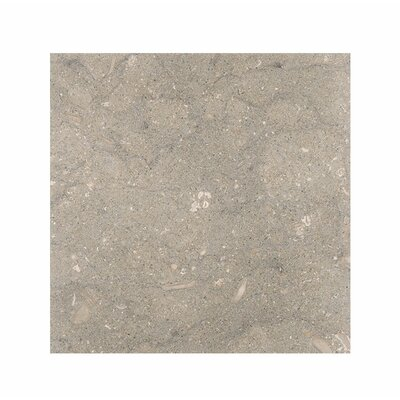 Sea Grass 18 x 18 Limestone Field Tile in Gray