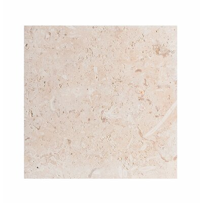 ShellStone Tile 18 x 18 Seashell Field Tile in Beige