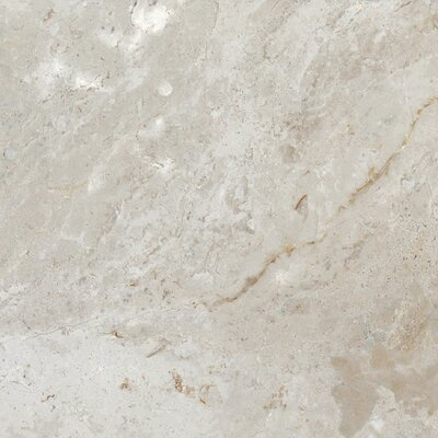 Peyton 12 W x 12 Porcelain Field Tile in Cool Gray