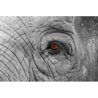 'Elephant Eye' Photographic Print on Wrapped Canvas CAN36850CM 1624