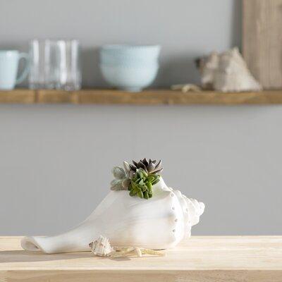 Ceramic Sea Shell Figurine